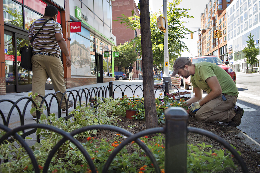 Planting flowers in the Atlantic Avenue BID.