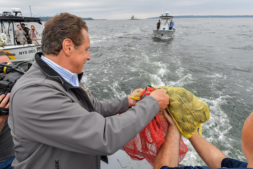 Andrew Cuomo looking at shellfish